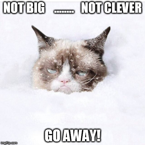 NOT BIG    ........   NOT CLEVER GO AWAY! | image tagged in grumpy cat snow | made w/ Imgflip meme maker