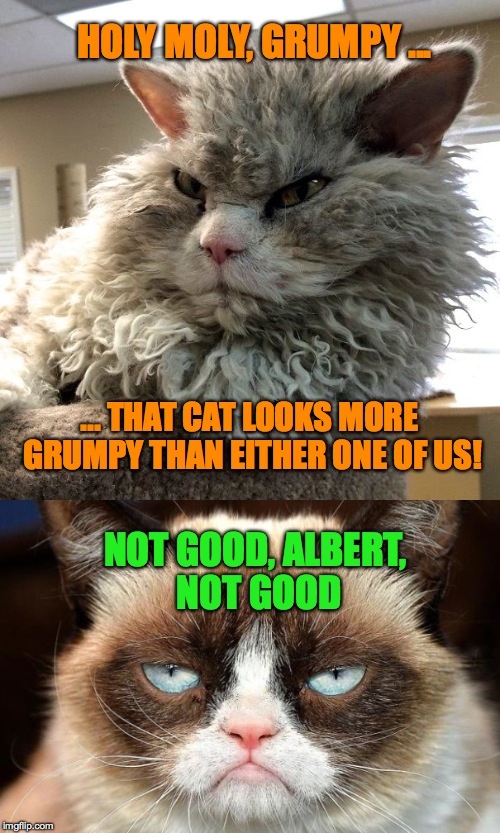 HOLY MOLY, GRUMPY ... NOT GOOD, ALBERT, NOT GOOD ... THAT CAT LOOKS MORE GRUMPY THAN EITHER ONE OF US! | made w/ Imgflip meme maker