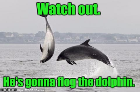 Watch out. He's gonna flog the dolphin. | made w/ Imgflip meme maker