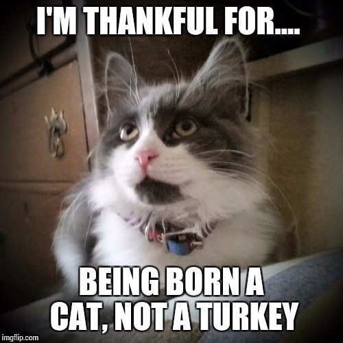 image tagged in thankful on thansgiving | made w/ Imgflip meme maker