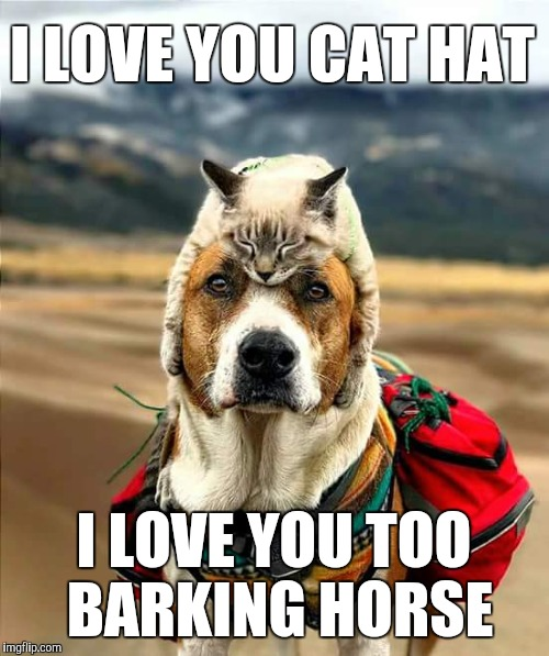 Cat hat | I LOVE YOU CAT HAT I LOVE YOU TOO BARKING HORSE | image tagged in cat,dog | made w/ Imgflip meme maker