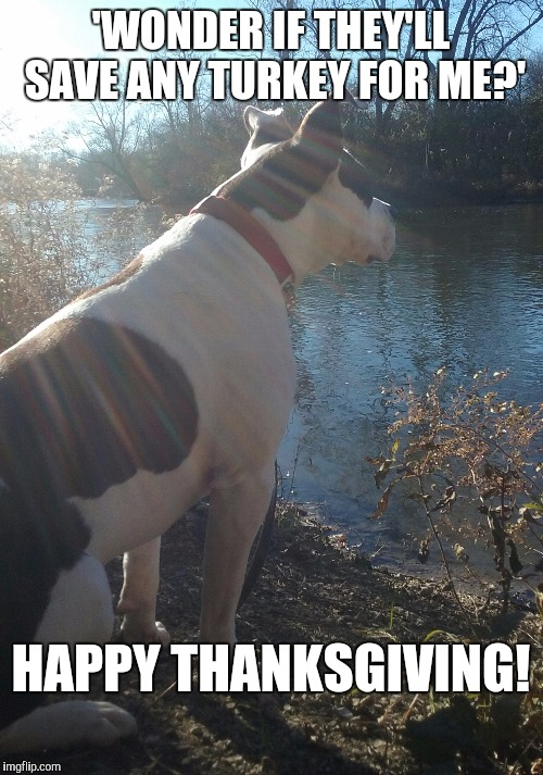 Thoughtful dog | 'WONDER IF THEY'LL SAVE ANY TURKEY FOR ME?' HAPPY THANKSGIVING! | image tagged in thoughtful dog | made w/ Imgflip meme maker