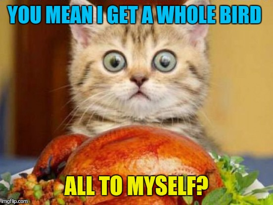 Happy Thanksgiving  | YOU MEAN I GET A WHOLE BIRD ALL TO MYSELF? | image tagged in memes,cats,happy thanksgiving,thanksgiving | made w/ Imgflip meme maker