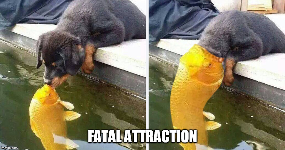 FATAL ATTRACTION | made w/ Imgflip meme maker