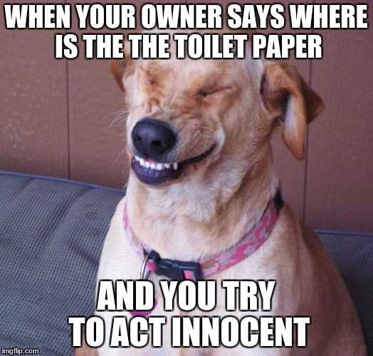 WHEN YOUR OWNER SAYS WHERE IS THE THE TOILET PAPER AND YOU TRY TO ACT INNOCENT | image tagged in smile dog | made w/ Imgflip meme maker