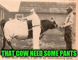 THAT COW NEED SOME PANTS | made w/ Imgflip meme maker