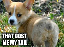 THAT COST ME MY TAIL | made w/ Imgflip meme maker