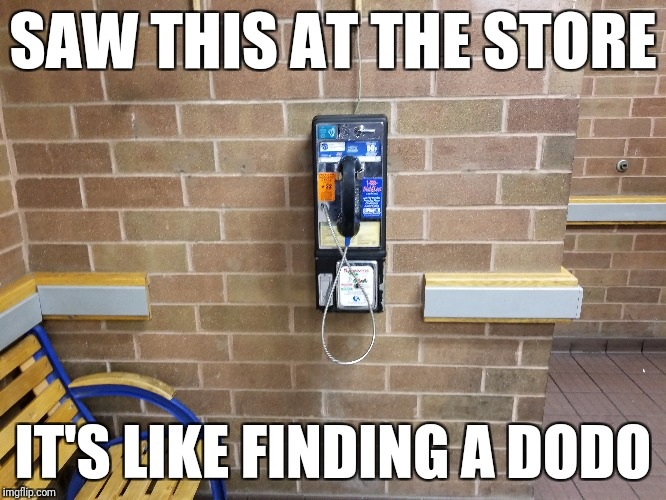 For real... | SAW THIS AT THE STORE IT'S LIKE FINDING A DODO | image tagged in memes,payphone | made w/ Imgflip meme maker