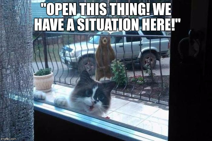 "cat_window_bear | ""OPEN THIS THING! WE HAVE A SITUATION HERE!"" 