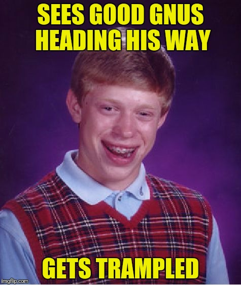 Bad Luck Brian Meme | SEES GOOD GNUS HEADING HIS WAY GETS TRAMPLED | image tagged in memes,bad luck brian | made w/ Imgflip meme maker