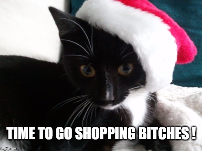TIME TO GO SHOPPING B**CHES ! | image tagged in shopping,black friday,cat,i should buy a boat cat | made w/ Imgflip meme maker