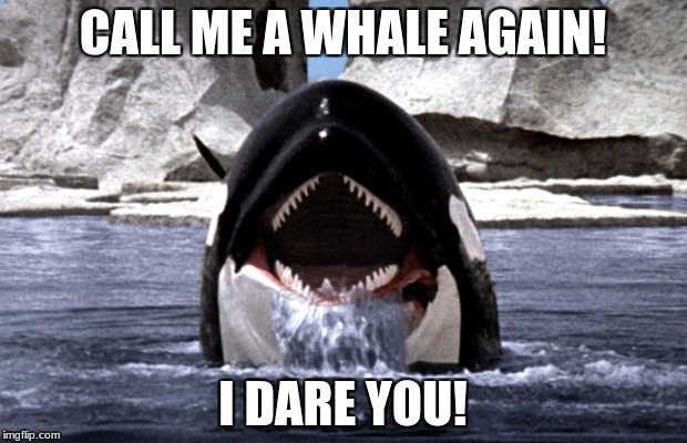 Orcas are dolphins | CALL ME A WHALE AGAIN! I DARE YOU! | image tagged in scary orca,dolphin,whale,killer whale,antartica | made w/ Imgflip meme maker