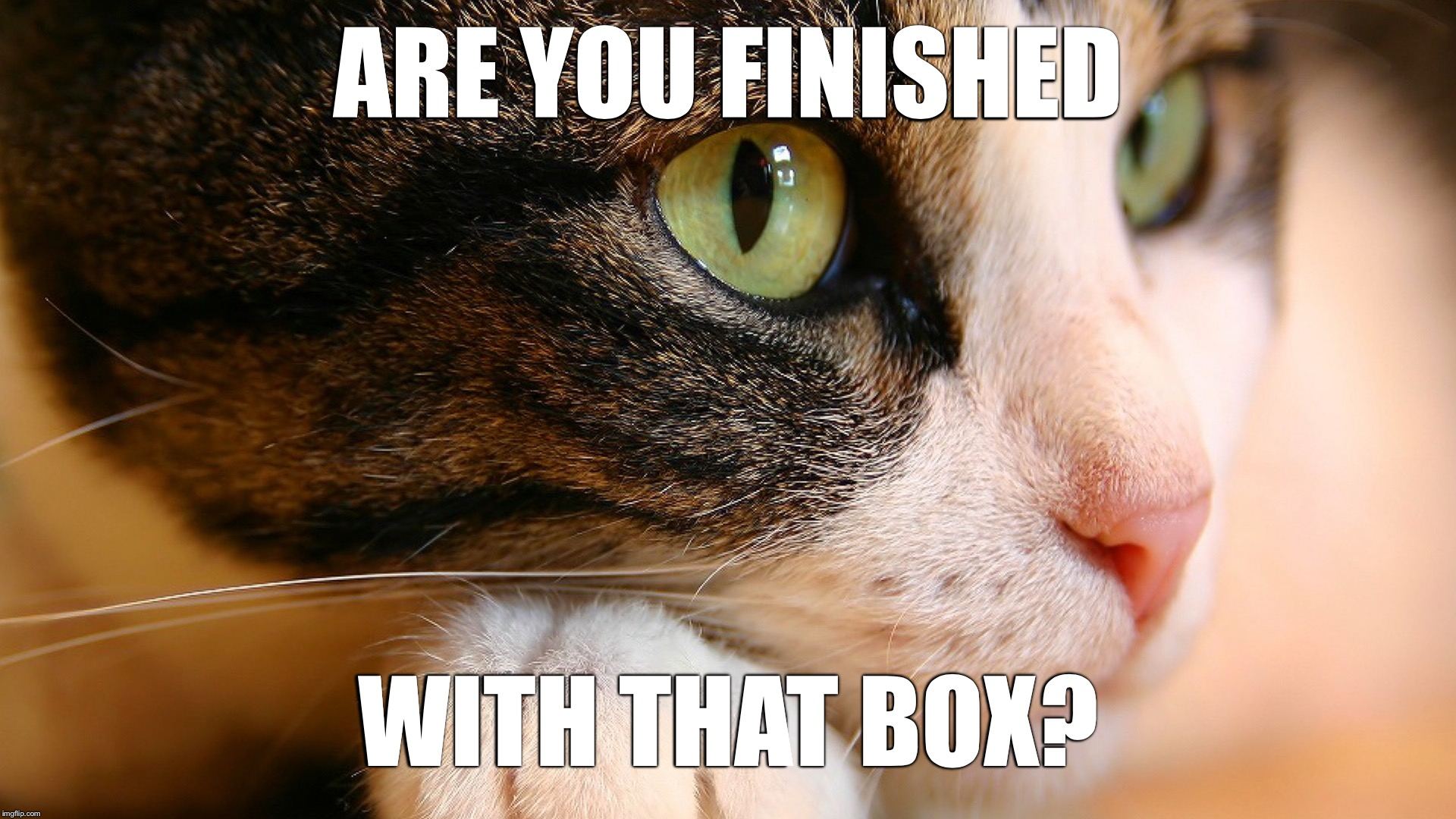 ARE YOU FINISHED WITH THAT BOX? | image tagged in memes,hd meme,cat,box | made w/ Imgflip meme maker