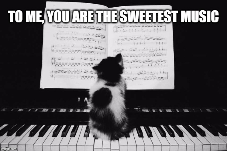 Positive Meme Weekend. It's My Event. Blah Blah Blah. Ripper13. 12/8-12/11 | TO ME, YOU ARE THE SWEETEST MUSIC | image tagged in positive meme weekend,music,i love you,positivity,kitten,piano | made w/ Imgflip meme maker
