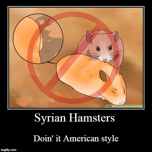 Syrian Hamsters  | Syrian Hamsters | Doin' it American style | image tagged in demotivationals,memes,hamster,america,style | made w/ Imgflip demotivational maker