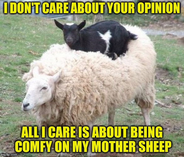 I DON'T CARE ABOUT YOUR OPINION ALL I CARE IS ABOUT BEING COMFY ON MY MOTHER SHEEP | made w/ Imgflip meme maker