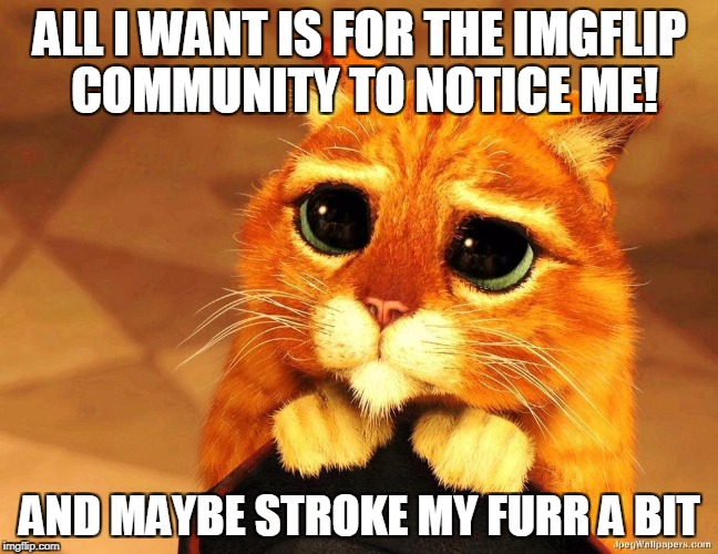 Imgflip can be brutal ey ;) | ALL I WANT IS FOR THE IMGFLIP COMMUNITY TO NOTICE ME! AND MAYBE STROKE MY FURR A BIT | image tagged in pussy,imgflip,funny,funny memes,upvotes | made w/ Imgflip meme maker