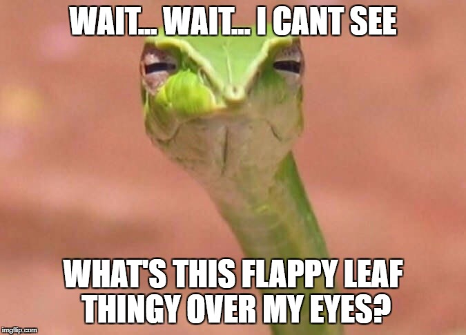 Skeptical snake | WAIT... WAIT... I CANT SEE WHAT'S THIS FLAPPY LEAF THINGY OVER MY EYES? | image tagged in skeptical snake | made w/ Imgflip meme maker