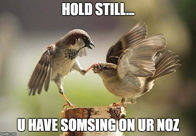 Birds shut up | HOLD STILL... U HAVE SOMSING ON UR NOZ | image tagged in birds shut up | made w/ Imgflip meme maker