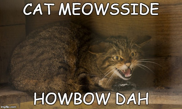As seen on Dr. Phil ≧◉ - ◉≦  | CAT MEOWSSIDE HOWBOW DAH | image tagged in memes,funny,cats,cash me ousside howbow dah,cat weekend,don't mess with this cat | made w/ Imgflip meme maker