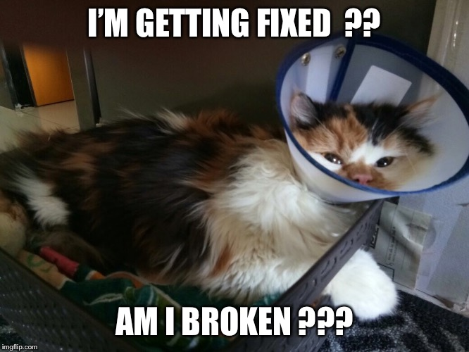 I'M GETTING FIXED  ?? AM I BROKEN ??? | image tagged in cat | made w/ Imgflip meme maker