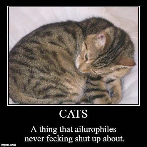 In A Nutshell | CATS | A thing that ailurophiles never fecking shut up about. | image tagged in funny,demotivationals | made w/ Imgflip demotivational maker