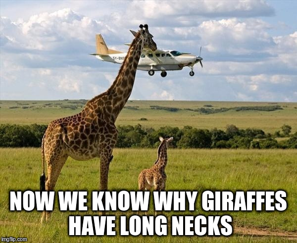 NOW WE KNOW WHY GIRAFFES HAVE LONG NECKS | made w/ Imgflip meme maker
