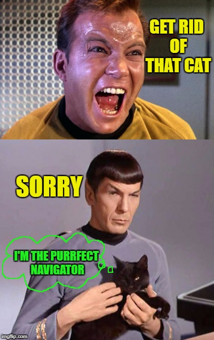 GET RID OF THAT CAT SORRY I'M THE PURRFECT NAVIGATOR | made w/ Imgflip meme maker