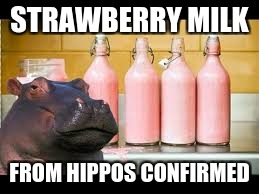 STRAWBERRY MILK FROM HIPPOS CONFIRMED | made w/ Imgflip meme maker