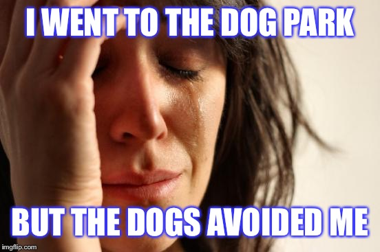 A typical saturday morning | I WENT TO THE DOG PARK BUT THE DOGS AVOIDED ME | image tagged in memes,first world problems,dogs,dogparks,whyyyyy | made w/ Imgflip meme maker