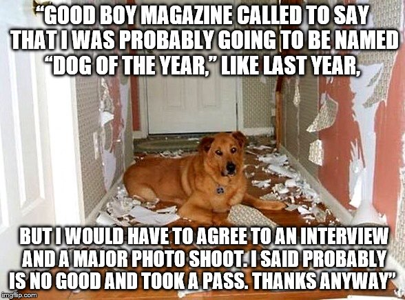 """GOOD BOY MAGAZINE CALLED TO SAY THAT I WAS PROBABLY GOING TO BE NAMED ""DOG OF THE YEAR,"" LIKE LAST YEAR, BUT I WOULD HAVE TO AGREE TO AN IN 