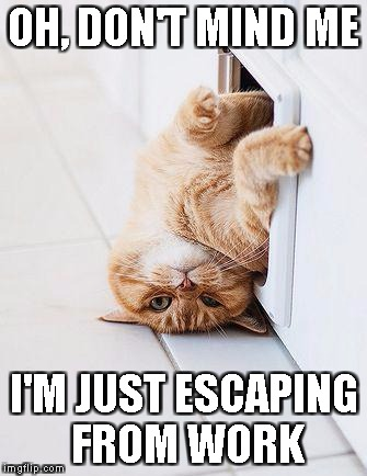 OH, DON'T MIND ME I'M JUST ESCAPING FROM WORK | image tagged in stuck cat | made w/ Imgflip meme maker