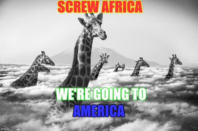 America | SCREW AFRICA WE'RE GOING TO AMERICA | image tagged in animals,funny,memes | made w/ Imgflip meme maker