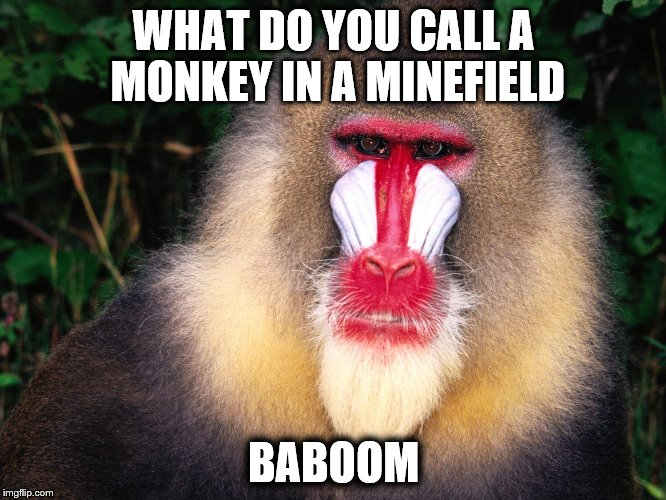 WHAT DO YOU CALL A MONKEY IN A MINEFIELD BABOOM | image tagged in monkey fun | made w/ Imgflip meme maker