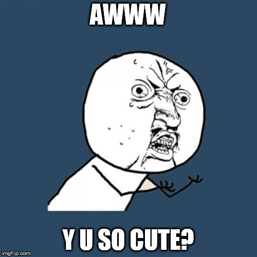 Y U No Meme | AWWW Y U SO CUTE? | image tagged in memes,y u no | made w/ Imgflip meme maker