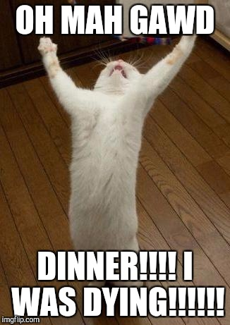 FINALLY | OH MAH GAWD DINNER!!!! I WAS DYING!!!!!! | image tagged in evil cat | made w/ Imgflip meme maker