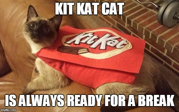 Like a cat actually does anything... | KIT KAT CAT IS ALWAYS READY FOR A BREAK | image tagged in cat,work | made w/ Imgflip meme maker