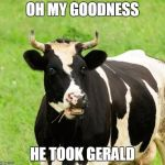 cows | OH MY GOODNESS HE TOOK GERALD | image tagged in cows | made w/ Imgflip meme maker