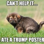 Even the body knows when something is bad and gets rid of it. | CAN'T HELP IT.... I ATE A TRUMP POSTER. | image tagged in puppy pooping | made w/ Imgflip meme maker