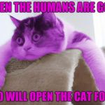 Deep RayThoughts | WHEN THE HUMANS ARE GONE WHO WILL OPEN THE CAT FOOD? | image tagged in raycat stare,memes | made w/ Imgflip meme maker