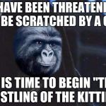 "Emperor Rustling | I HAVE BEEN THREATENED TO BE SCRATCHED BY A CAT IT IS TIME TO BEGIN ""THE RUSTLING OF THE KITTIES"" 