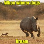 But a nightmare for the rhino | When wiener dogs Dream | image tagged in animals,dream,dog | made w/ Imgflip meme maker