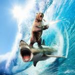 Bear Riding Shark meme