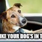 1323ev dog in car meme generator imgflip