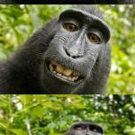 bad pun monkey meme