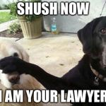 Dogs | SHUSH NOW I AM YOUR LAWYER | image tagged in dogs | made w/ Imgflip meme maker
