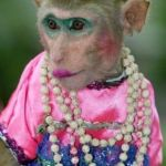 Monkey make up | WHEN YOU WENT TO YOUR FAVORITE AUNT'S HOUSE | image tagged in monkey make up | made w/ Imgflip meme maker