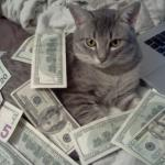 cat money meme