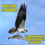 Well, it seemed legit, at the time | Next time I call Uber I should probably check the driver's credentials | image tagged in fish,uber | made w/ Imgflip meme maker