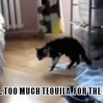 too much | NOPE .... TOO MUCH TEQUILA  FOR THE NIGHT | image tagged in gifs,cats | made w/ Imgflip video-to-gif maker